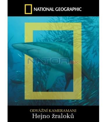 Hejno žraloků  (Shark Swarm)