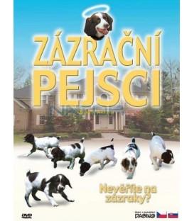 Zázrační pejsci (Miracle Dogs)