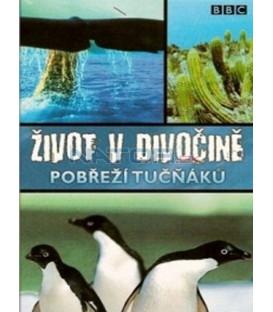 Život v divočině 6 - Pobřeží tučňáků (Wild South America: Penguin Shores) DVD