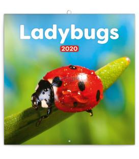 Poznámkový kalendár Lienky 2020, 30 x 30 cm