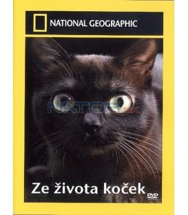 Ze života koček (Science of Cats)