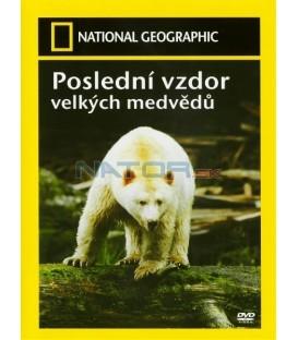 Poslední vzdor velkých medvědů (Last Stand Of The Great Bear)