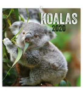 Poznámkový kalendár Koaly 2020, 30 x 30 cm