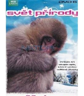Svět přírody - DVD 6 - Sněžné opice (Natural World: Snow Monkeys) DVD