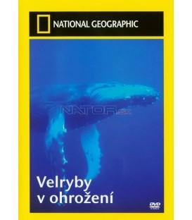 Velryby v ohrožení (Whales in crisis)